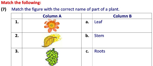 online evs practice worksheets types of plants worksheets for class 2 students