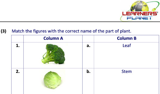Science printable worksheet uses of plants for class ii students