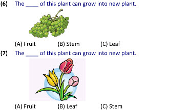 Class 5 Science worksheets on Growing Plants