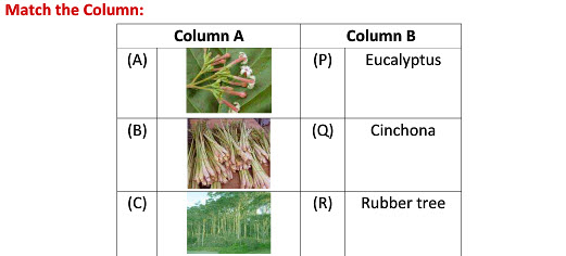 Forest our lifeline worksheets for class 7 cbse students
