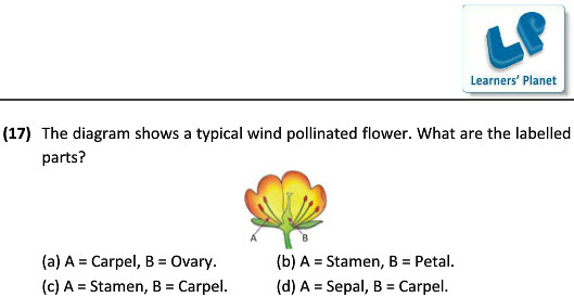 CBSE 7th graders science worksheets on reproduction in plants for kids