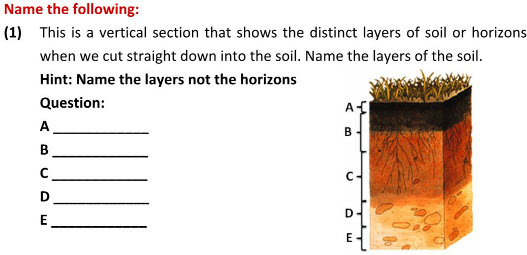 Class 7 Workseets For Science Students On Soil: Soil Layers Worksheet At Alzheimers-prions.com