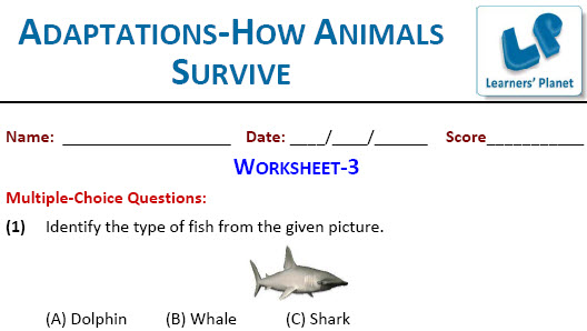 Grade-4-Science Adaptations-How Animals Survive worksheet