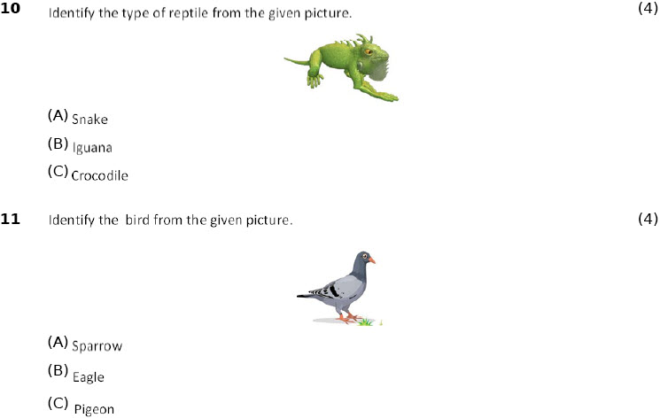 Science Online Practice Worksheets Adaptations How Animals Survive