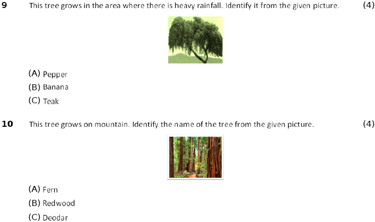 4th class science online printable worksheets Adaptations-How Plants Survive