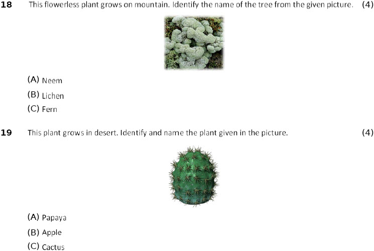 Science worksheets Adaptations-How Plants Survive for 4th class students