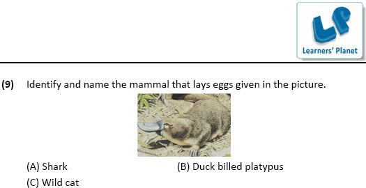 worksheets on evs for Animals & Their Young Ones for grade 4
