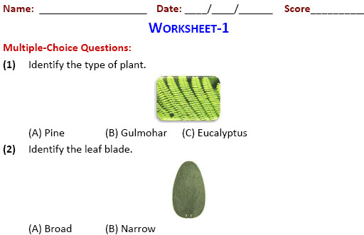 fourth class EVS worksheets on The Green Plants