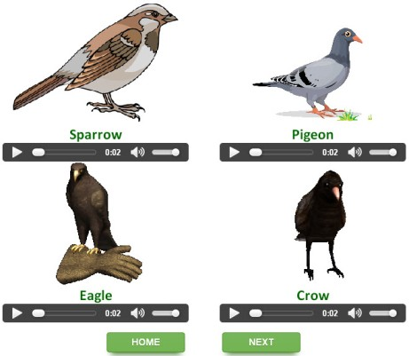 English grammar interactive quizzes on Birds for kids