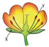 \\server\Quiz on Home\Mahesh B\simran\Grade-7-REPRODUCTION IN PLANTS\Final JPG\6.jpg