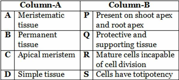 Tissues Worksheets Class 9th Cbse Science. Tissue Worksheet5 Match The Following. Worksheet. Cells And Tissues Worksheet At Mspartners.co