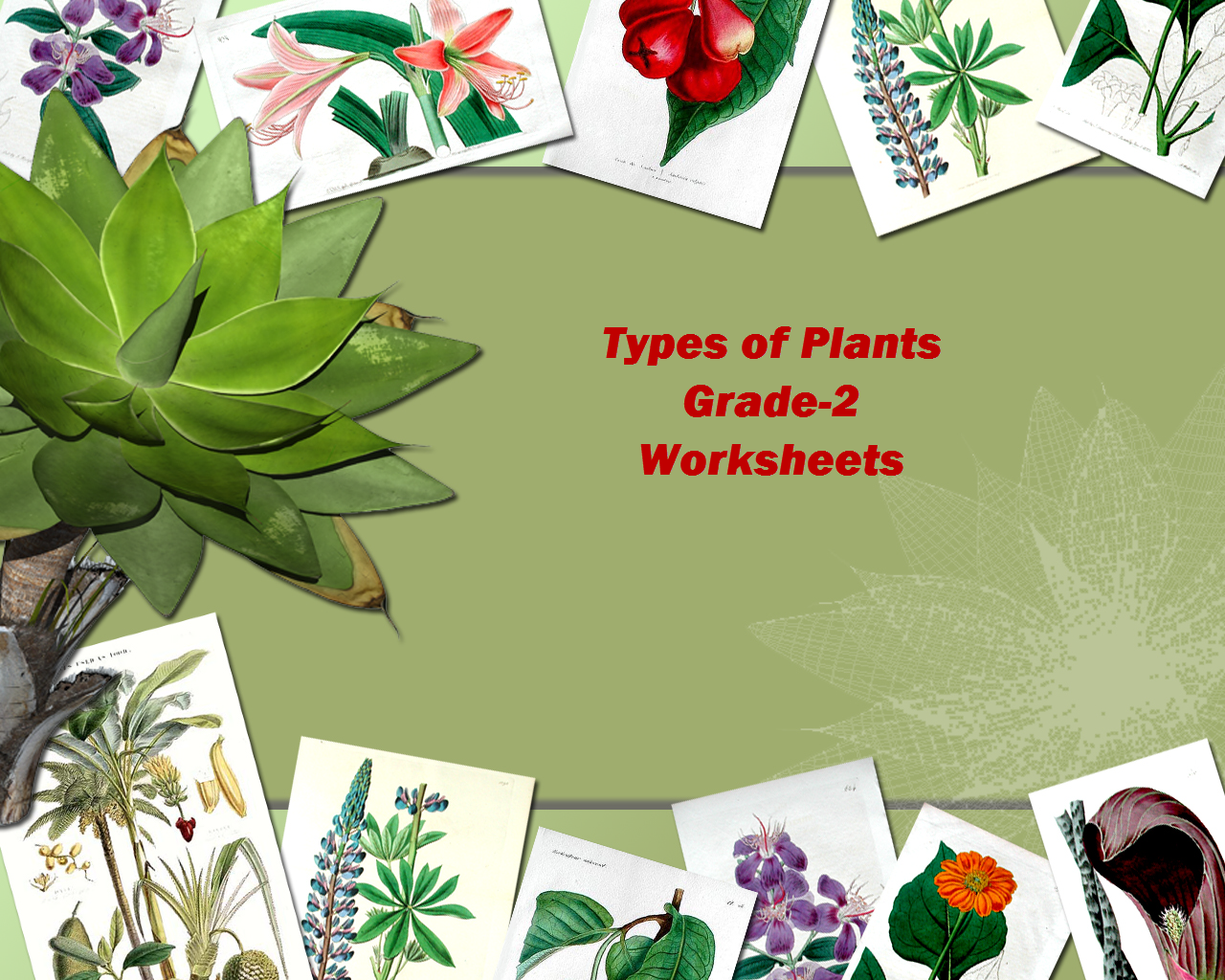 Grade 2 Evs Types Of Plants Worksheets Test Papers Practice Sheets
